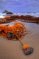 Seaweed on Bandon Beach